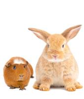 Conejos y Cobayas
